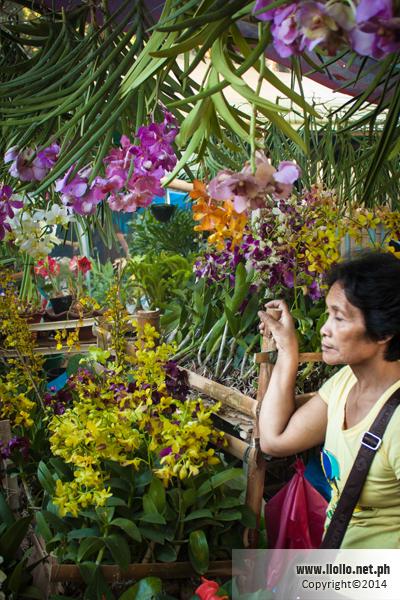 Jaro Orchid Vendor